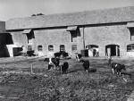 Okenbury Farm